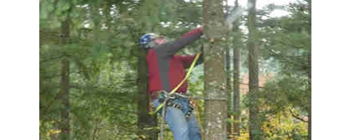 Mike's Tree Service - 24 Hour Emergency Service 503-608-9040