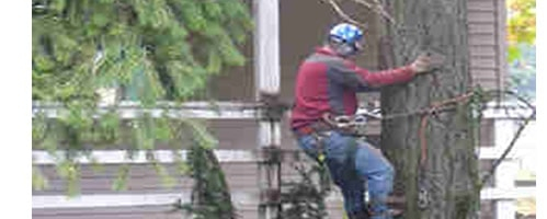 Remove Fallen Trees From Roof of House 503-608-9040