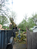 Feeding dangerous trees into chipper during cleanup