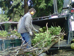 Clearing away downed trees