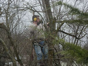 tree service - cutting deal tree